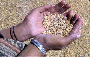 hands-and-seeds_20147660063_o