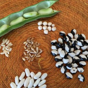Palestine seeds