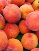 peaches-bryan-costin